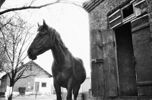 Лошадь во дворе. Гомелькая обл., Чернобылькая зона 1986 год
