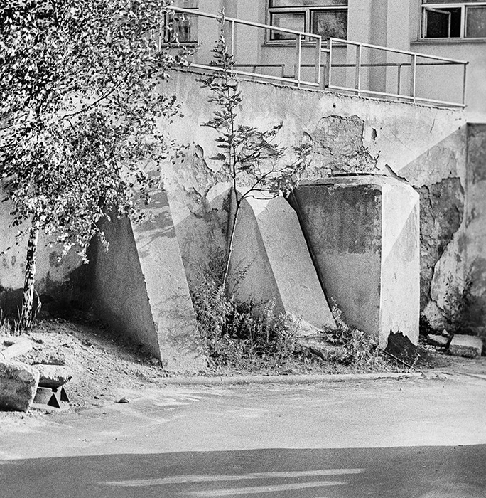 Березки во дворе. 1985г. Минск