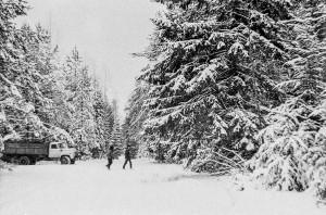Заготовка новогодних елок, Минский р-н, середина 80-х