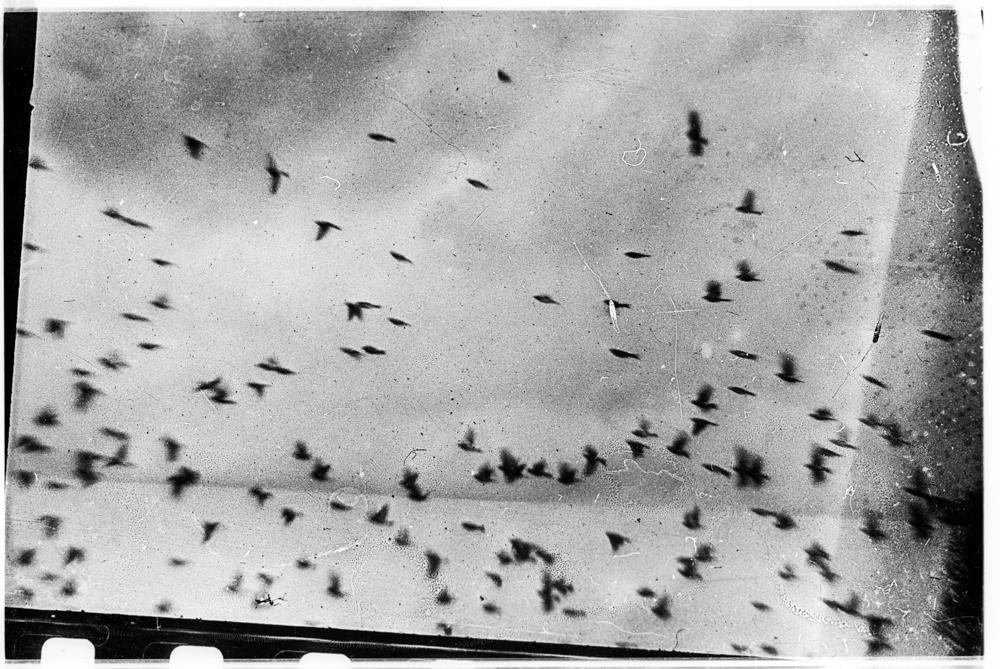 Птицы. Минск, 1984 год