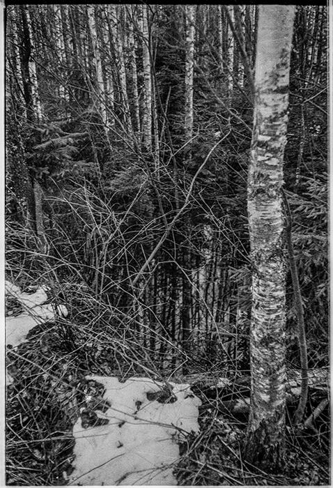 В лесу. Минский р-н, 1986 год