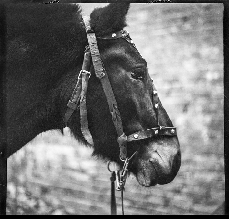 Рабочая лошадка. 1983 год